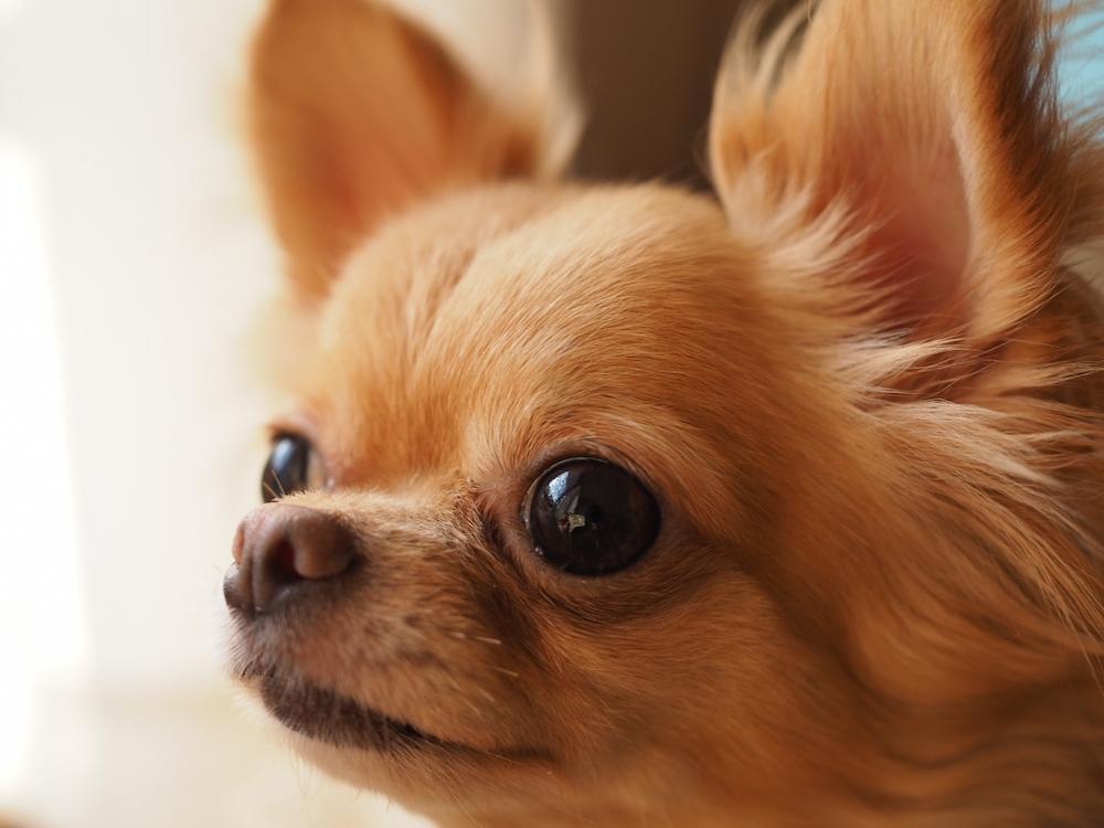 自分へのご褒美の効果、愛犬にも期待できる?!