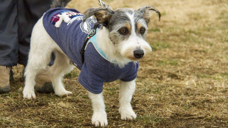犬の体調やストレスを考えて再トレーニングを行う