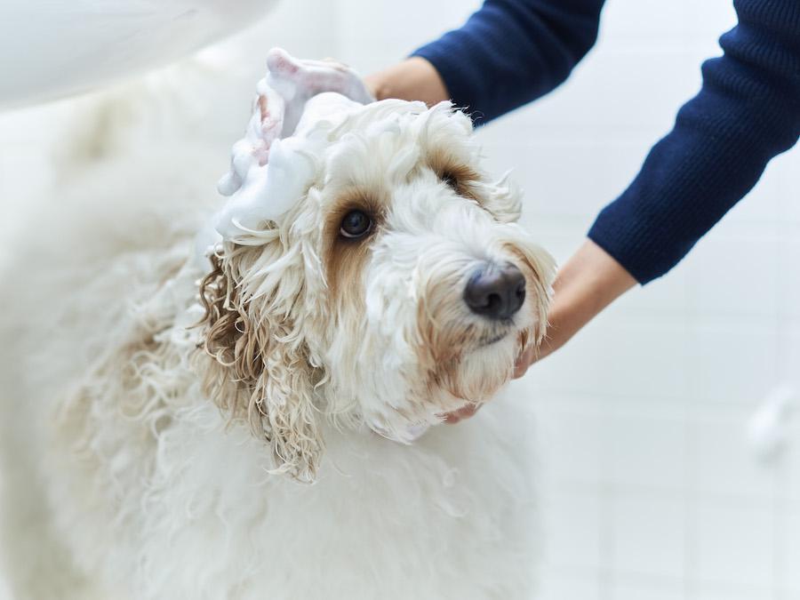TEGSUMI:犬と人に安心・安全のオーガニックシャンプーを
