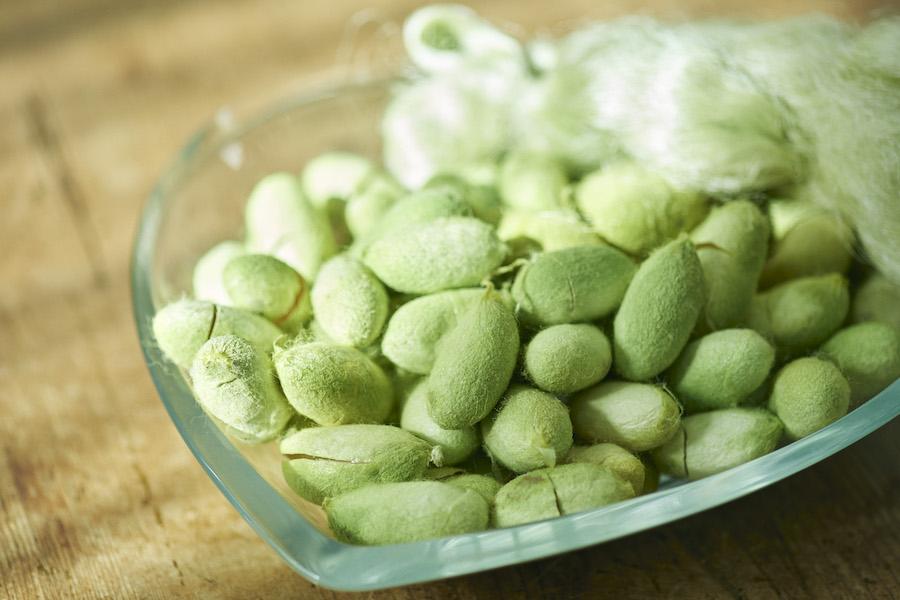 TEGSUMI:希少性の高い国産の天然シルク(天蚕:てんさん)を使用したシルクエキス配合