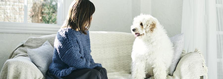 TEGSUMI:愛犬への想いが商品開発につながった