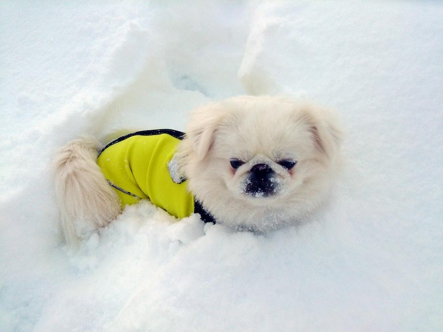 保温性の高機能のドッグウェアは冬の防災用品としても役立つ!