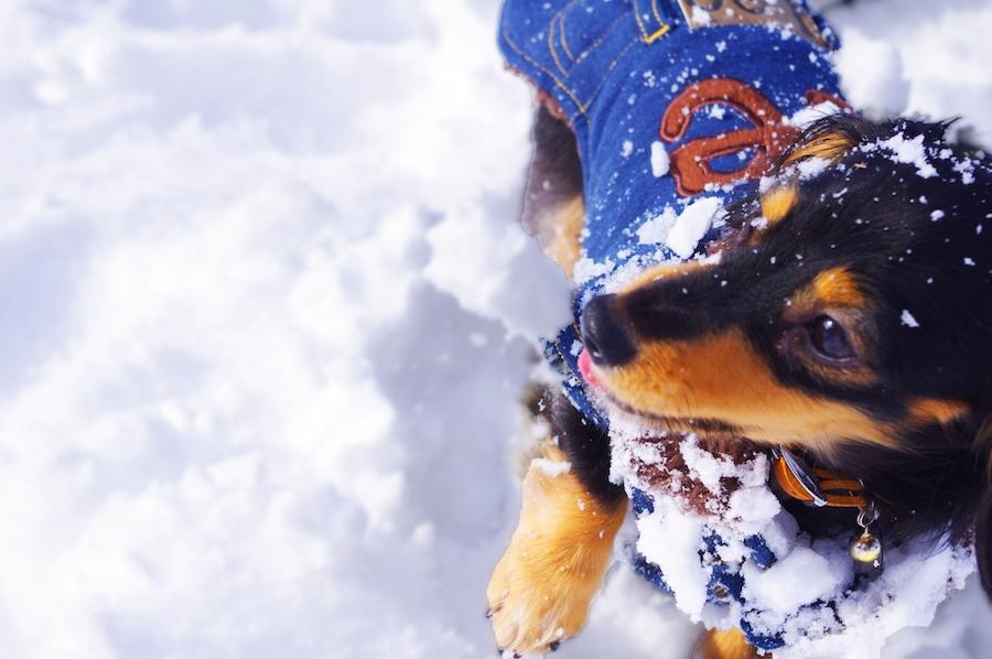 雪遊びではどんな素材のドッグウェアを選んだらよいの?
