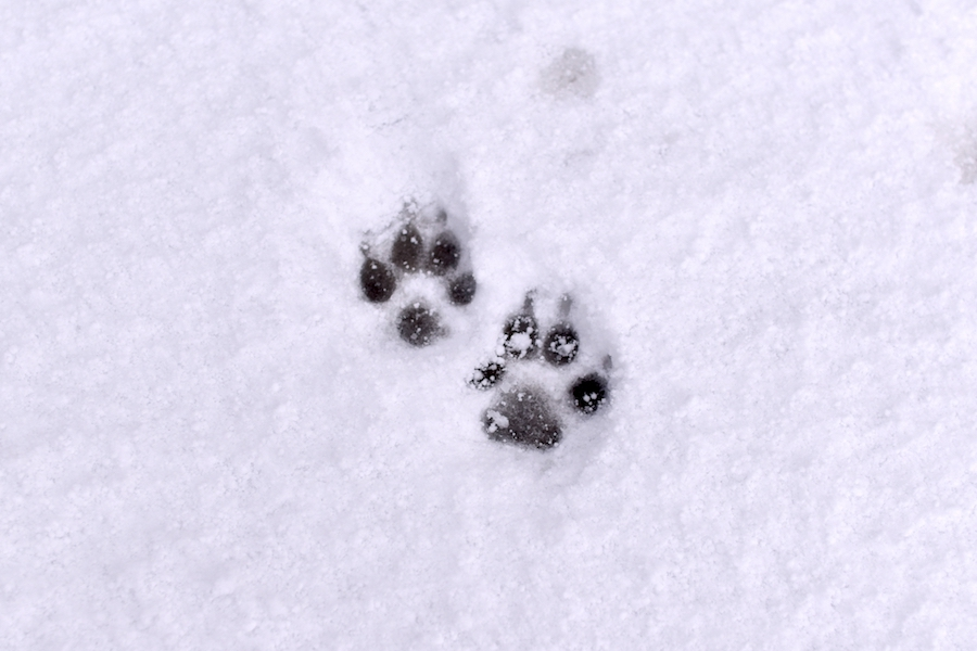 寒い季節の道路や雪の日の散歩道、愛犬の足元に潜む危険