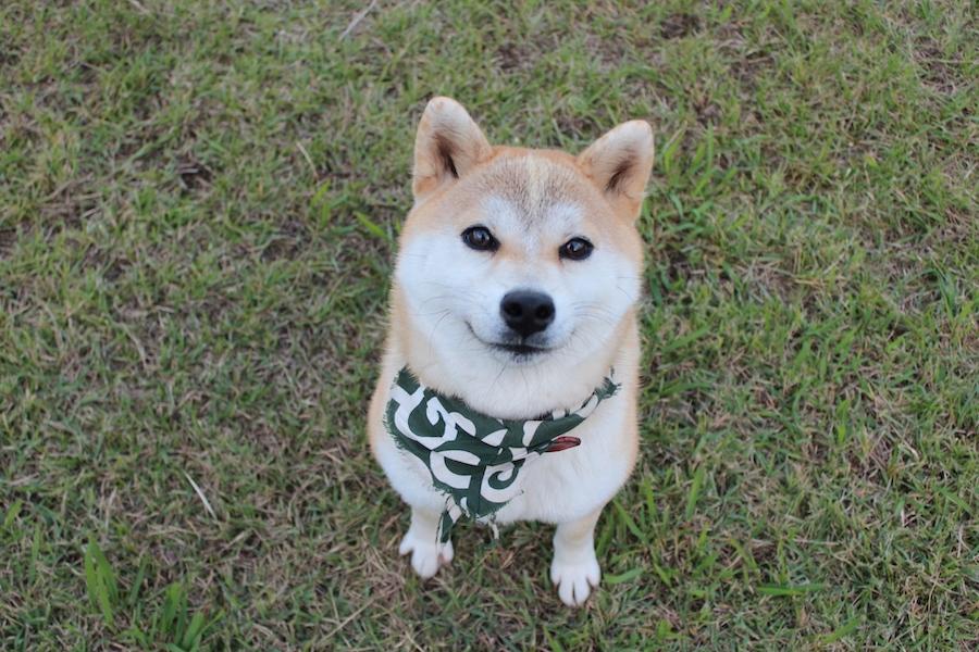 2月23日は風呂敷の日!風呂敷の良さを愛犬と見直そう