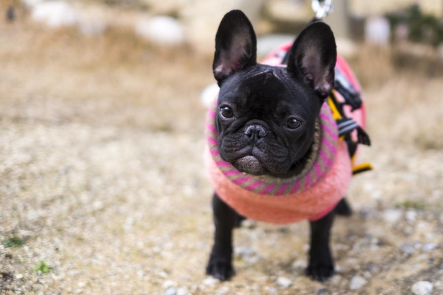 機能性が高い洋服で愛犬の体を守ろう!