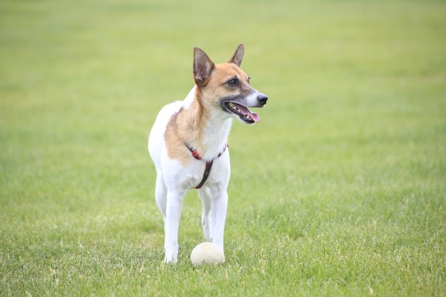 犬の関節や筋肉の異変に気が付くポイント