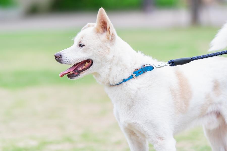 犬の腸の長さはどれくらい?犬の腸のメカニズムについて