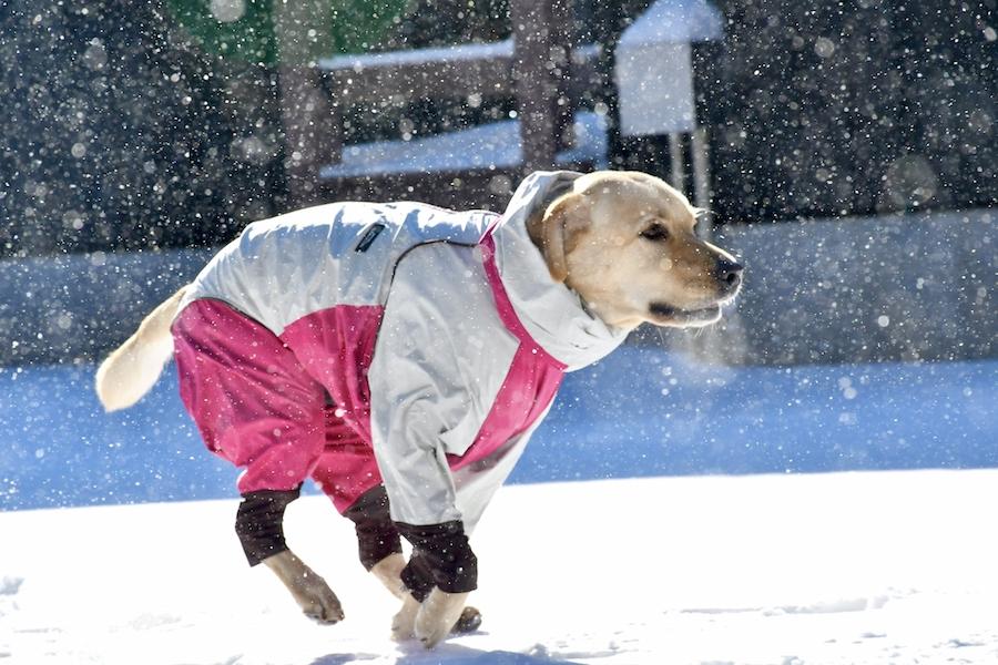 2月の雪に要注意!東京でも雪の可能性が?