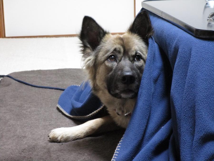 愛犬が低温火傷に!自宅でできる対処法と予防方法