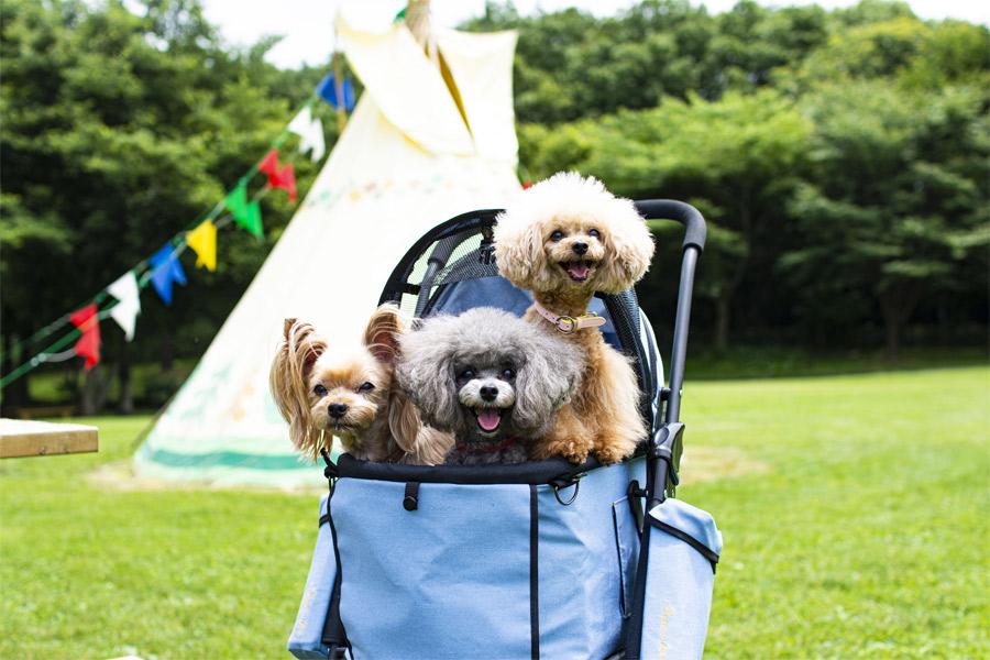 天使のカート おしゃれでセレブな犬用のペットカート ドッグパッド