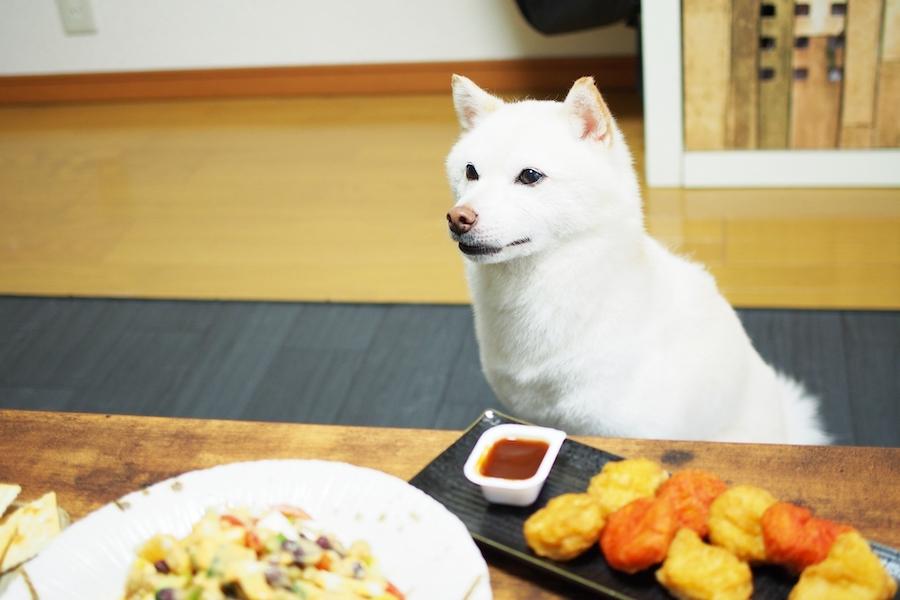 犬にキャベツを与える際の注意点