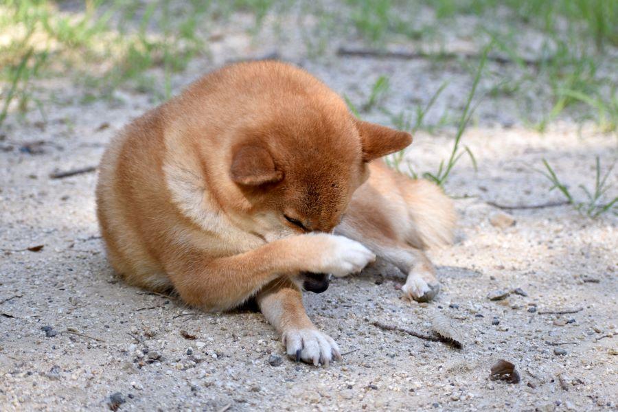 犬がストレスを感じるとみせる仕草や行動の変化