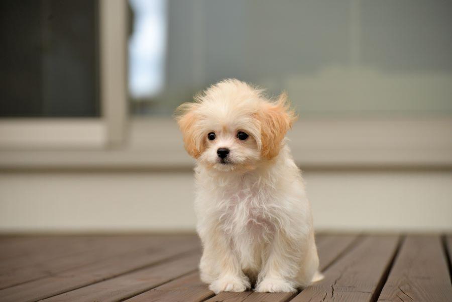 春は犬がストレスを感じやすい
