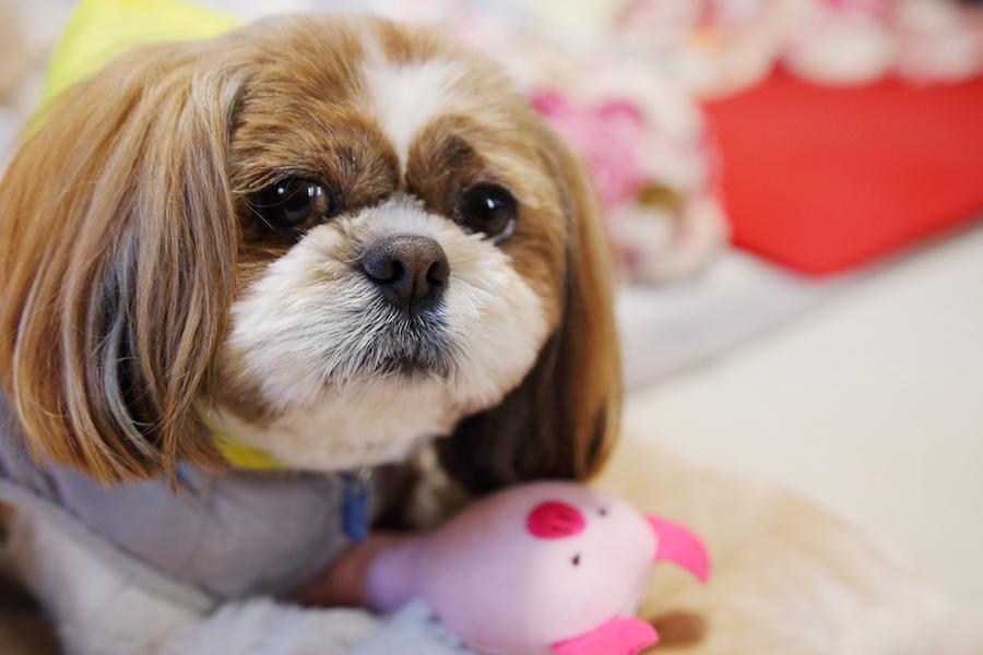 愛犬の命、家族を守るために