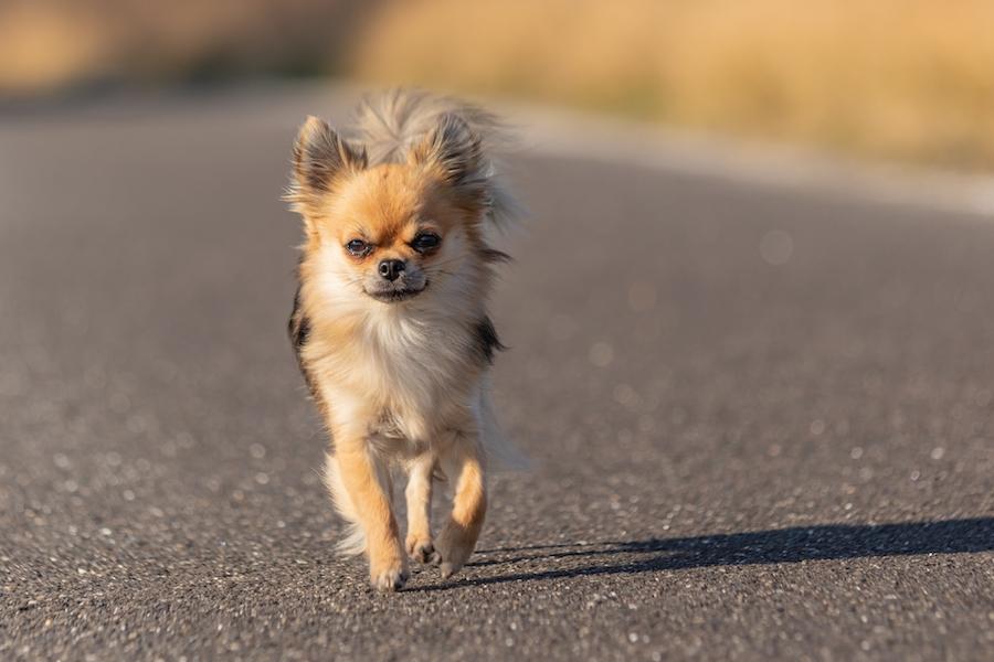 犬用の靴やブーツは肉球や足先を守るために必要なことがある