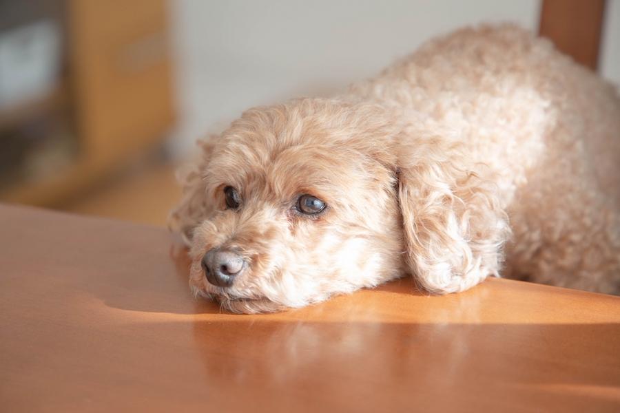 引っ越しは犬のストレスになる?