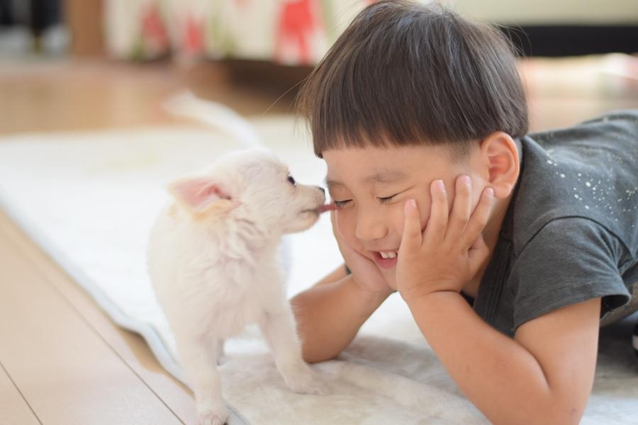 DOGPAD編集部厳選!おすすめの犬の名前ランキング!