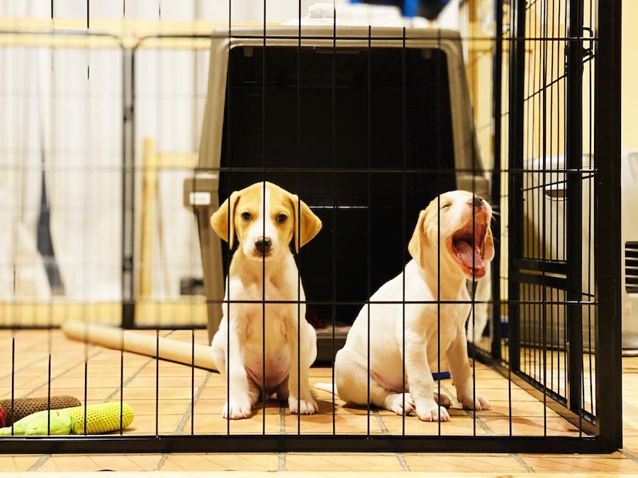 【実践】犬のケージトレーニング方法