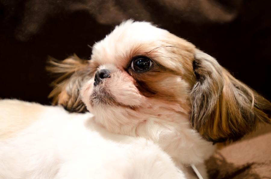 愛犬との引っ越しで気を付けること【必要な手続き】
