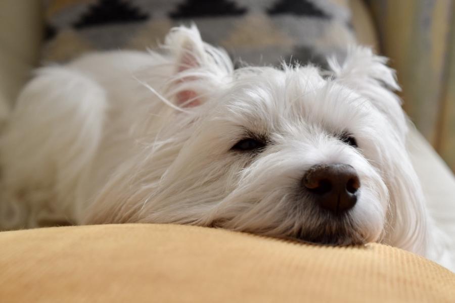 シニア犬は老化とともに足腰が弱くなっていく