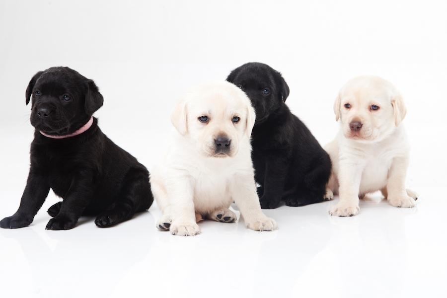 犬の心拍数は体の大きさで異なる