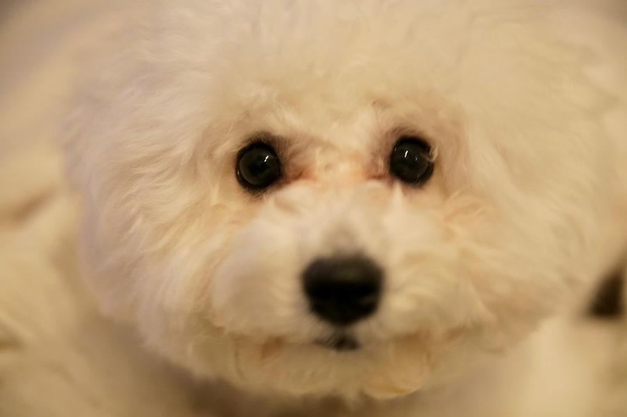 目の病気はシニア犬だけに起こるものではない