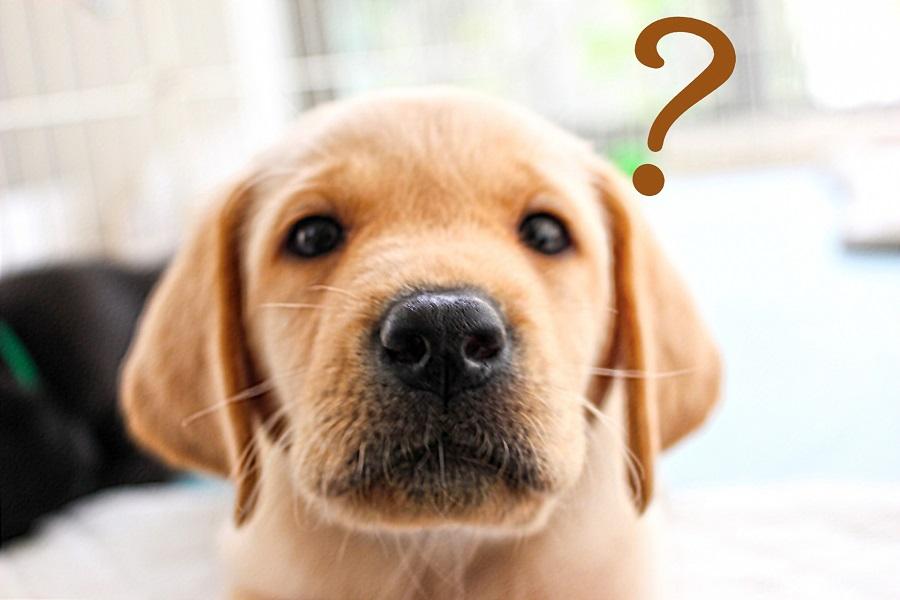 何歳からシニア犬と呼ぶの?シニア犬に対する素朴な疑問