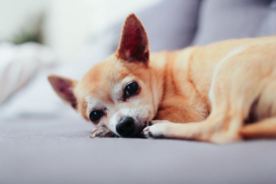 愛犬たちに癒やされる毎日。愛犬たちを癒やしていますか?