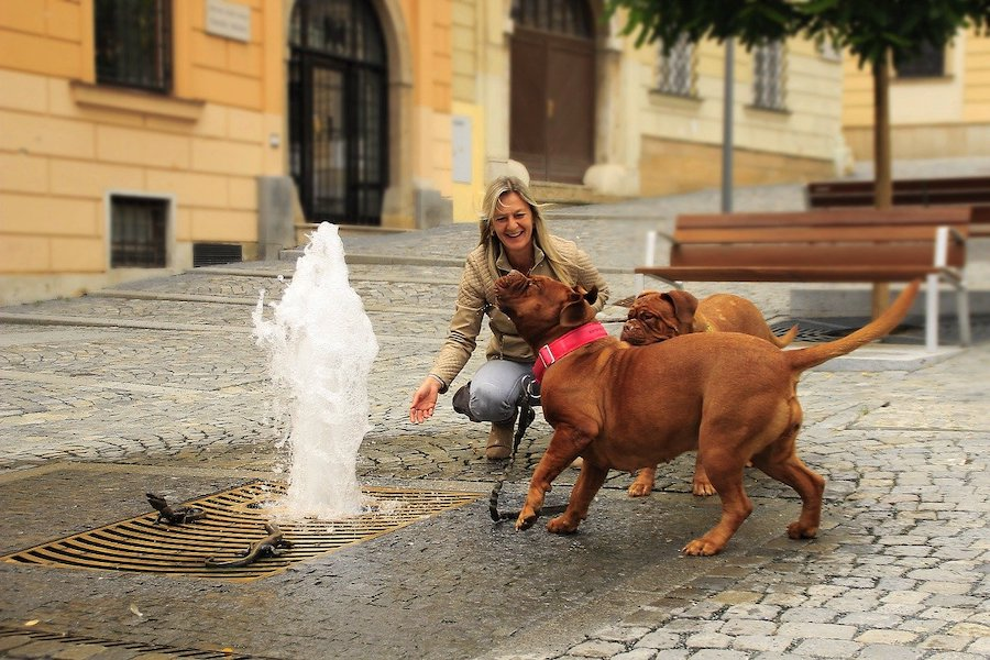 ヨーロッパの人が好む犬の傾向