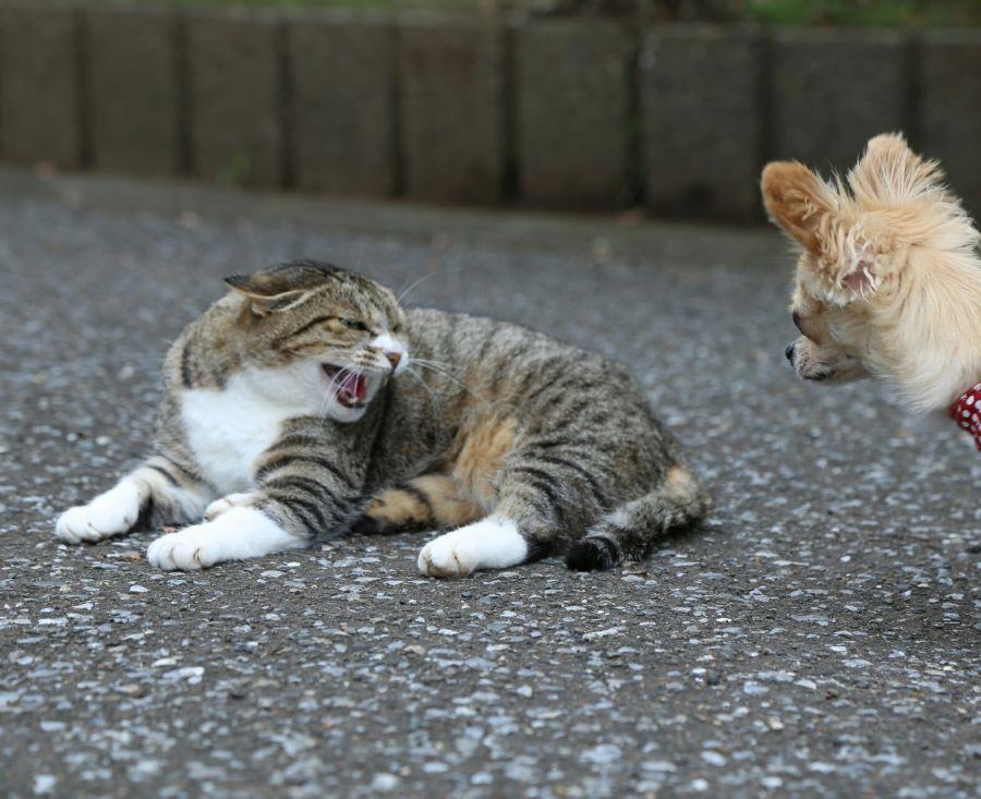 喧嘩相手は犬だけではない!ネコや他のペットにも注意