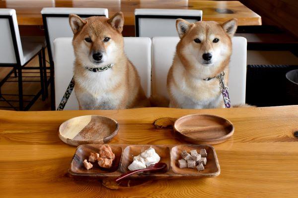 犬に食べさせていいもの、食べさせたらいけないもの