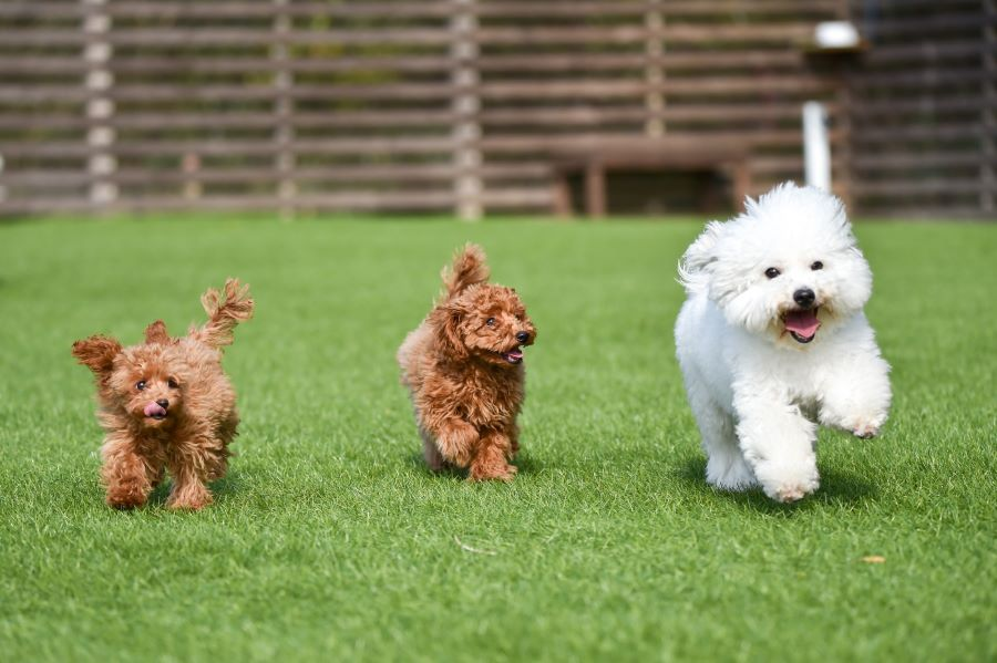 犬のおもちゃ「たまごちゃん」は小型犬の飼い主に人気!