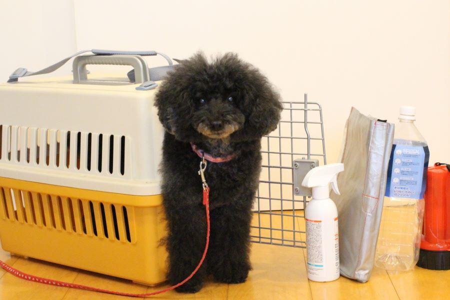 ペットとの避難時に安心!愛犬のための避難用防災バッグを作ろう