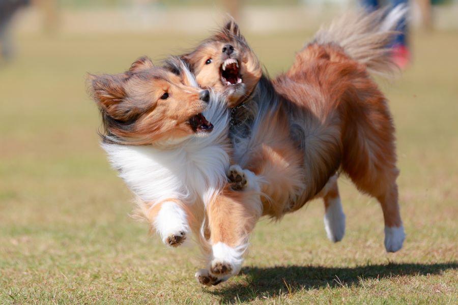 喧嘩?遊び?犬同士の遊びを解説!