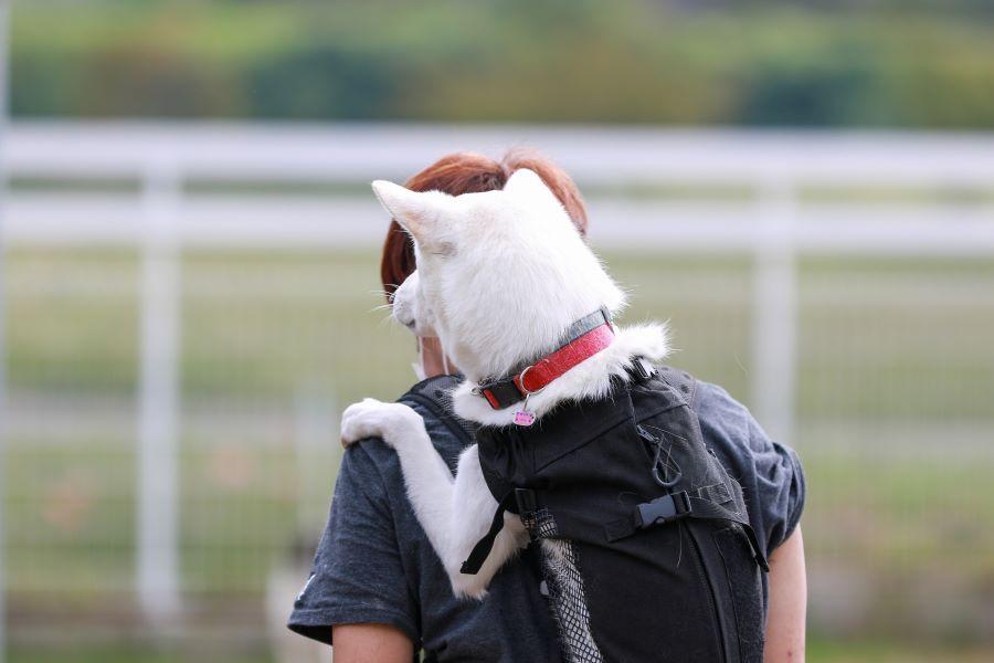 愛犬と避難所へ。ペットと一緒に避難するとき困ること