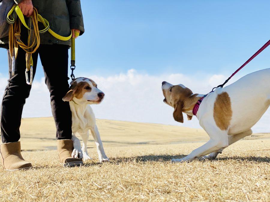 愛犬たちの遊びが喧嘩に発展した場合の対処法