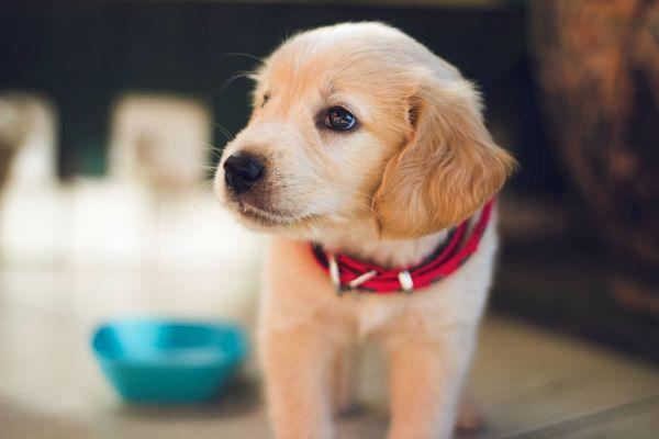 危険度ランク別 愛犬に与えてはいけない食べ物