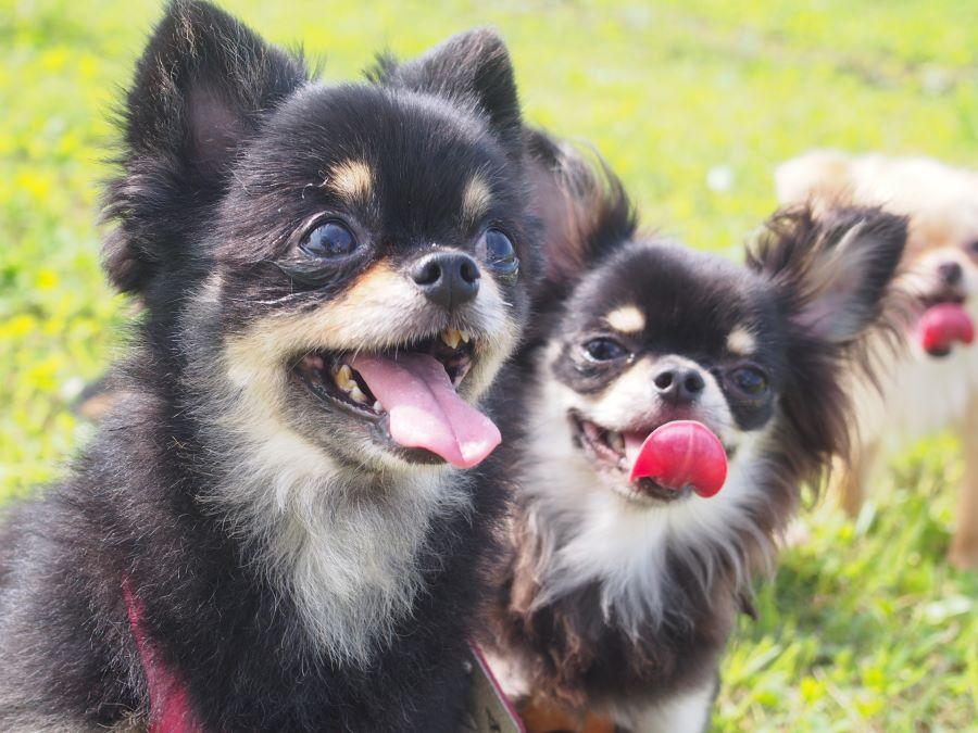 特別なことをしない、愛犬と過ごす日々の生活が愛おしい