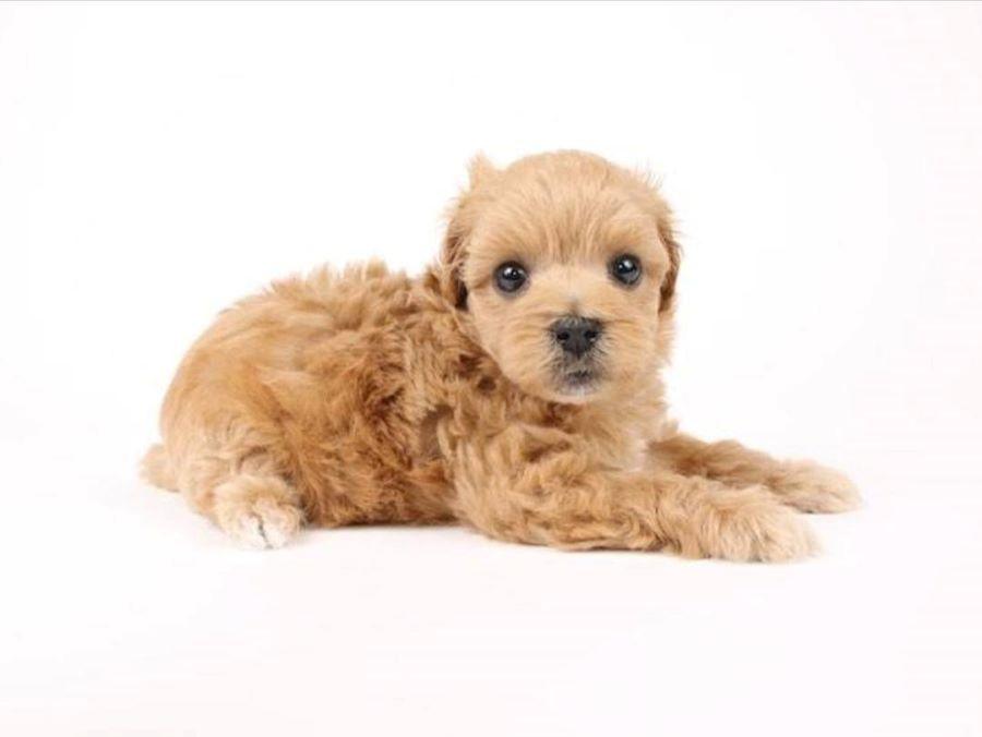 犬を迎える方法はペットショップで購入するだけではない