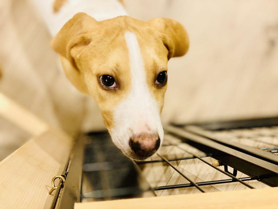 保護犬を迎えるときに必ず確認したいこと【飼い主側】