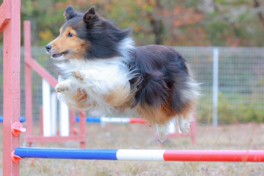 注目のオンライン犬イベント!Animal World Cup2021 Japan Festival