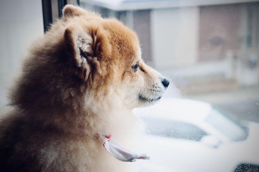 高温多湿の梅雨は犬の食欲不振が起こりやすい