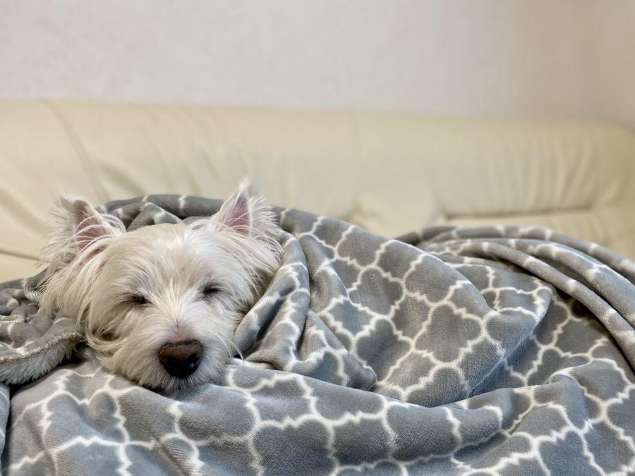 高齢犬(シニア犬)のケア【震える場合】