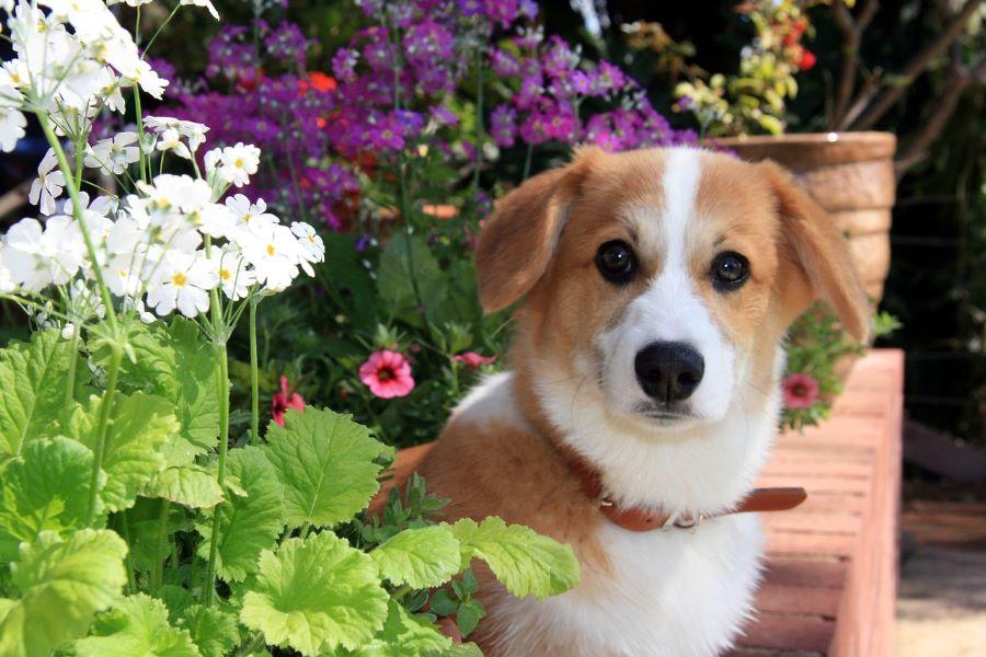 犬好きのお母さんとワンちゃんの素敵な投稿をピックアップ!