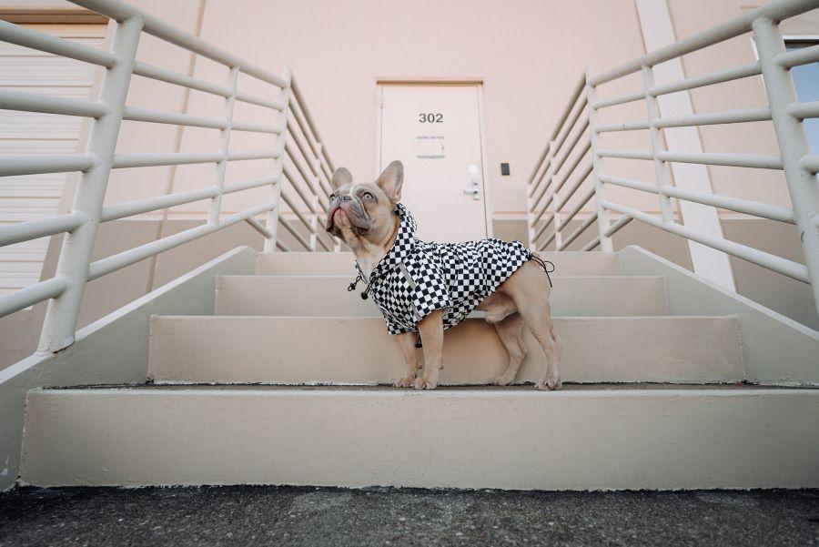 梅雨の長雨、愛犬も飼い主さんもお散歩がストレスに?