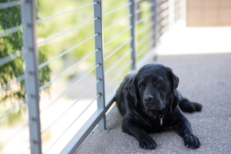 保護犬を迎えるときに必ず確認したいこと【犬側】
