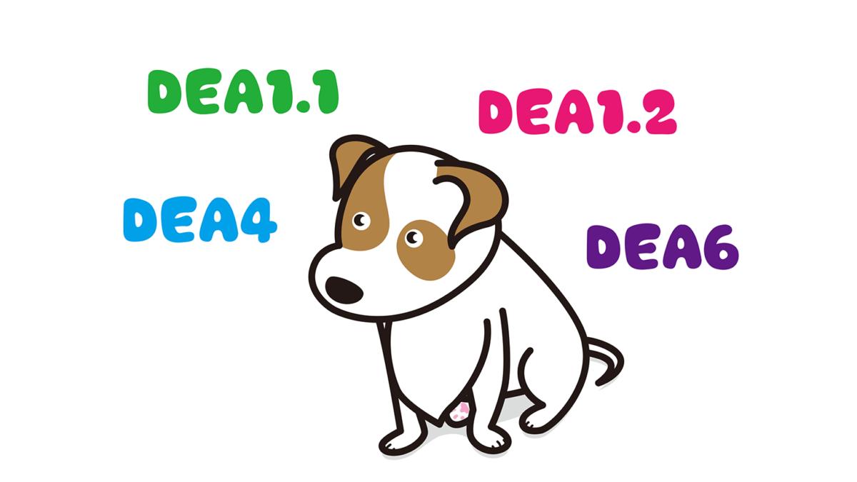 犬の血液型は13種類以上ある