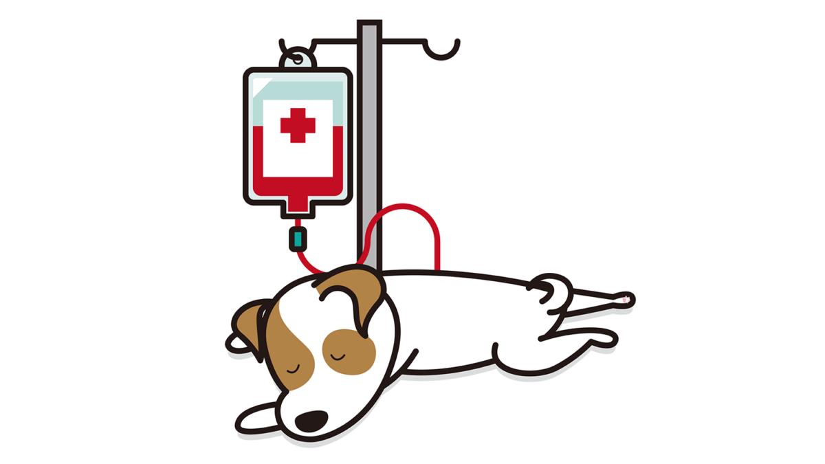 犬の献血ドナー(供血犬)登録の流れ