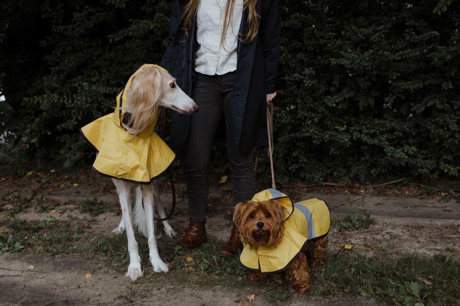 犬のレインウェアは1着あると便利